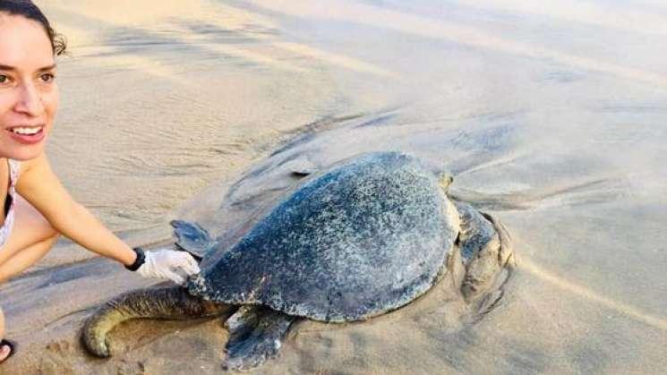 Trabajan Chiapas y Oaxaca para conservar la tortuga marina